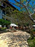 το plumeria δέντρων κλάδων πετά μια όμορφη σκιά στοκ εικόνα με δικαίωμα ελεύθερης χρήσης