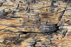 Τραχύ κατασκευασμένο λεπτομερές ξύλινο υπόβαθρο στοκ φωτογραφία με δικαίωμα ελεύθερης χρήσης
