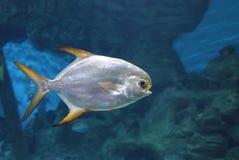 Τροπικές μεγάλες ψάρια και χελώνα σε ένα μεγάλο ενυδρείο στοκ φωτογραφία με δικαίωμα ελεύθερης χρήσης