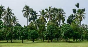 Τροπική φυτεία στο νησί της Ιάβας, Ινδονησία στοκ εικόνες με δικαίωμα ελεύθερης χρήσης