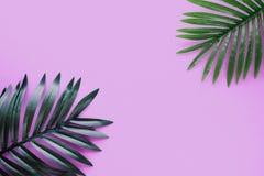 Τροπικός στενός επάνω φυτών φυλλώματος φύλλων με το διαστημικό υπόβαθρο αντιγράφων χρώματος Ιδέες εννοιών φύσης και καλοκαιριού στοκ εικόνα με δικαίωμα ελεύθερης χρήσης