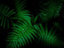 Τροπικό υπόβαθρο φύλλων, πράσινο σχέδιο υποβάθρου στοκ εικόνες