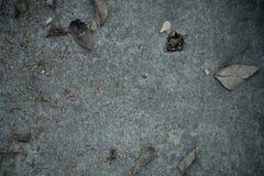 Τσιμεντένιο πάτωμα που καλύπτει από τα ξηρά φύλλα στοκ εικόνα με δικαίωμα ελεύθερης χρήσης