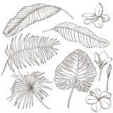 φοίνικας φύλλων τροπικός Γραφική απεικόνιση Χαραγμένα φύλλα ζουγκλών διανυσματική απεικόνιση
