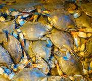 Φρέσκα μπλε καβούρια της Μέρυλαντ στοκ εικόνες