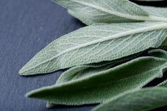 Φρέσκος οργανικός κήπος ή κοινά λογικά φύλλα officinalis Salvia στη φυσική πέτρα Οικογένεια μεντών Lamiaceae στοκ εικόνα
