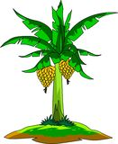 Φρέσκος όμορφος εμπορικός αγρότης δέντρων μπανανών ελεύθερη απεικόνιση δικαιώματος