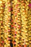 Φρούτα της σύστασης φοινίκων, του ζωηρόχρωμου κόκκινου και κίτρινου υποβάθρου σχεδίων φύσης στοκ φωτογραφία με δικαίωμα ελεύθερης χρήσης
