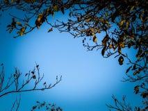 Φύλλα φθινοπώρου ενάντια στο μπλε ουρανό στοκ φωτογραφίες
