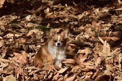 Φύλλα φθινοπώρου και ένα σκυλί στοκ φωτογραφία με δικαίωμα ελεύθερης χρήσης