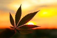 Φύλλο καννάβεων, εικόνα υποβάθρου Φωτογραφίες Themed των εγκαταστάσεων και της μαριχουάνα καννάβεων στην ανατολή Προϊόν CBD ασφαλ στοκ φωτογραφία