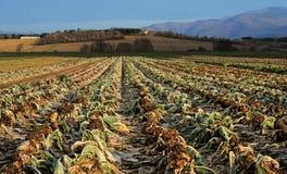 Φυσική άποψη των γεωργικών συγκομιδών στοκ φωτογραφία