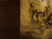 Φυσική ξύλινη σύσταση ακακιών, υπόβαθρο στοκ φωτογραφίες