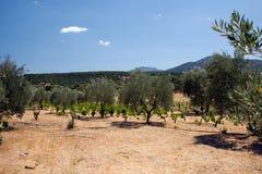 Φυτεία στη Σαρδηνία στοκ εικόνα με δικαίωμα ελεύθερης χρήσης