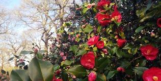 Φυτεία της Isabella στο Ρίτσμοντ, Λονδίνο στοκ εικόνες