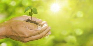 Φυτό στα χέρια στοκ φωτογραφίες με δικαίωμα ελεύθερης χρήσης