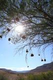 Φωλιές πουλιών υφαντών στοκ εικόνες