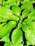 Φωτογραφία του φυτού και των φύλλων που εκδίδονται με την εφαρμογή πινέλων στοκ φωτογραφία με δικαίωμα ελεύθερης χρήσης