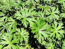 Φωτογραφία των πράσινων φυλλωδών εγκαταστάσεων που εκδίδονται με μια εφαρμογή πινέλων στοκ εικόνα με δικαίωμα ελεύθερης χρήσης