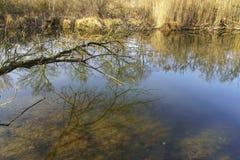 Φωτογραφίες φύσης από Szigetköz στην Ουγγαρία στοκ εικόνες με δικαίωμα ελεύθερης χρήσης