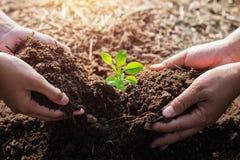 χέρι βοήθειας φυτεύοντας το δέντρο στον κήπο eco στοκ φωτογραφίες