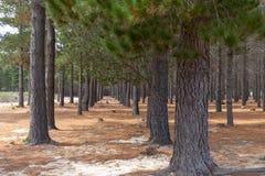 Χαμηλότερο πάρκο Tokai στοκ φωτογραφίες