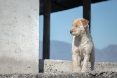Χαριτωμένη άσπρη Ragged και πεινασμένη στάση σκυλιών στα σκαλοπάτια με τον ουρανό και mountainon στοκ εικόνες με δικαίωμα ελεύθερης χρήσης