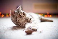 Χαριτωμένη γάτα που βρίσκεται στο πάτωμα σε ένα θολωμένο υπόβαθρο με το bokeh στοκ φωτογραφία με δικαίωμα ελεύθερης χρήσης