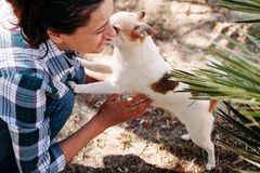 Χαριτωμένο σκυλί chihuahua μια καυτή θερινή ημέρα στο καθαρό αέρα κάτω από το φοίνικα με την αγαπημένη κυρία του στοκ εικόνες