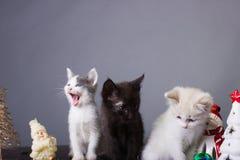 Χασμουρητό γατακιών, γάτες, μαύρη, άσπρη γάτα, γατάκι στοκ εικόνες με δικαίωμα ελεύθερης χρήσης