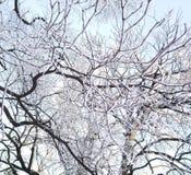 Χειμερινή διάθεση στοκ εικόνες
