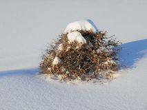 Χειμερινό μπονσάι στοκ εικόνες με δικαίωμα ελεύθερης χρήσης