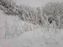 Χειμερινό υπόβαθρο, παγετός στη χλόη στοκ φωτογραφία