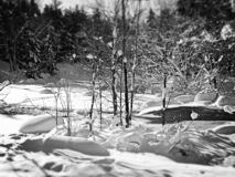 Χειμερινό mallow στοκ φωτογραφία