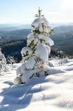 Χιονισμένα τρία με τα νορβηγικά βουνά στην πλάτη στοκ φωτογραφία με δικαίωμα ελεύθερης χρήσης