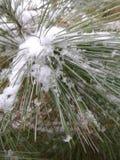 Χιονώδες πεύκο στοκ φωτογραφίες με δικαίωμα ελεύθερης χρήσης