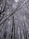 Χιονώδη χειμερινά δέντρα 8 στοκ φωτογραφία με δικαίωμα ελεύθερης χρήσης