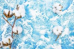 Χνουδωτό άσπρο λουλούδι βαμβακιού σε ένα μπλε υπόβαθρο Επίπεδο να βρεθεί στοκ εικόνες