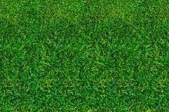 Χορτοτάπητας, πράσινη χλόη το καλοκαίρι επάνω από την όψη κινηματογράφηση σε πρώτο πλάνο, φυσικό υπόβαθρο στοκ εικόνες