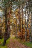 Χρυσό φθινόπωρο πτώση στοκ εικόνα