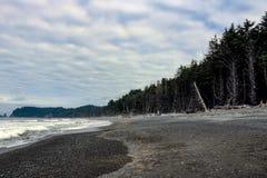 Χτυπημένος driftwood και ανάμεικτα ωκεάνια συντρίμμια που συσσωρεύονται στις μαύρες άμμους του χαμένου backpacking ίχνους ακτών στοκ εικόνα