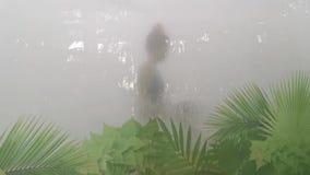 Υγρή σάουνα εσωτερική σε Therme Βουκουρέστι, Ρουμανία απόθεμα βίντεο