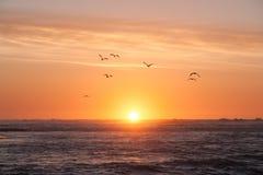 υψηλό ηλιοβασίλεμα θάλασσας διάλυσης jpg Συνοδεία πουλιών οι τελευταίες ακτίνες του ήλιου που εξαφανίζεται πίσω από την επιφάνεια στοκ εικόνα με δικαίωμα ελεύθερης χρήσης