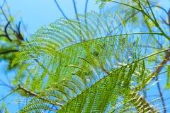 Υπόβαθρο της φτέρης που φαίνεται τροπικά φύλλα μπροστά από το μπλε ουρανό στο Μπαλί στοκ εικόνες με δικαίωμα ελεύθερης χρήσης