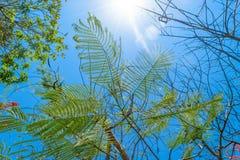 Υπόβαθρο της φτέρης που φαίνεται τροπικά φύλλα μπροστά από το μπλε ουρανό στο Μπαλί στοκ φωτογραφία