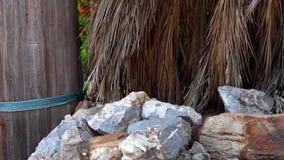 Υπόβαθρο των μεγάλων πετρών με τα φύλλα φοινικών 4K φιλμ μικρού μήκους