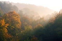 Υπόβαθρο φύσης με το δασικό τοπίο φθινοπώρου στο πρωί στοκ φωτογραφία με δικαίωμα ελεύθερης χρήσης