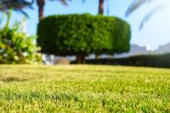 Ωραία γύρω από το διαμορφωμένο δέντρο περικοπής σε έναν κήπο στοκ φωτογραφία με δικαίωμα ελεύθερης χρήσης
