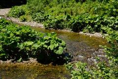 Πάγκος ποταμών στη μέση του ρεύματος νερού στοκ εικόνες