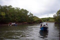 Πάρκο Geoforest Kilim, Langkawi, Μαλαισία στοκ φωτογραφία με δικαίωμα ελεύθερης χρήσης